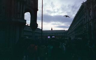 Il solito gabbiano che sorvola Piazza San Marco