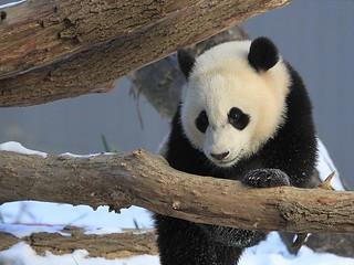 Pretty Snow Princess Bao Bao