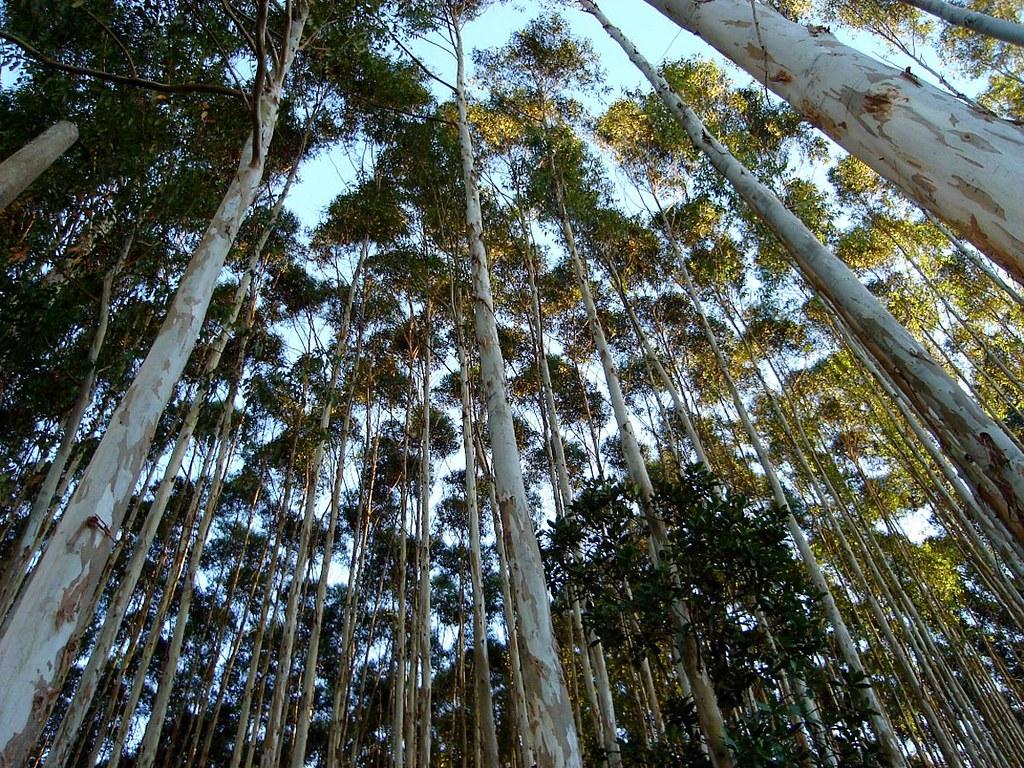 Organiza es divulgam manifesto contra a libera o de for Plano de un vivero forestal