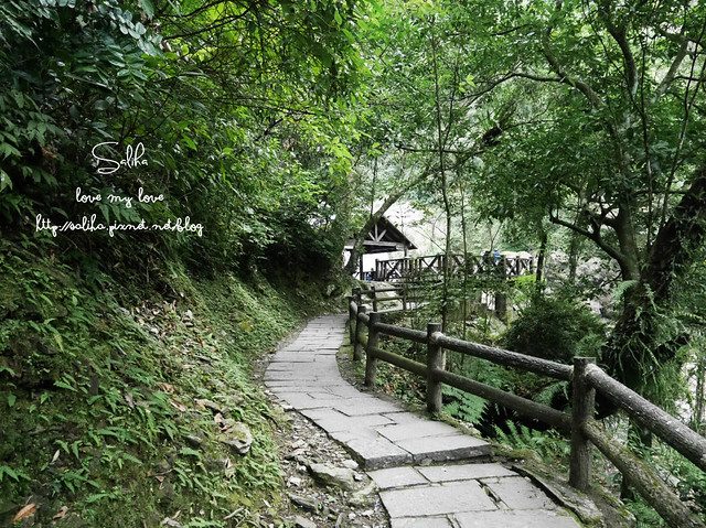 烏來景點內洞森林遊樂區 (17)