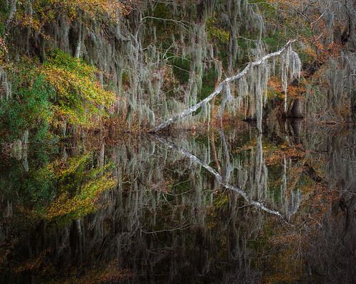 winter color reflection nature water canon georgia landscape richmondhill canon50mm canon7d