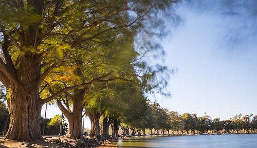 longexposure trees landscape fuji riverside tripod wideangle southerncalifornia ultrawide fairmountpark apsc xt1 mirrorless remotetrigger 10stopndfilter benrotripod xmount xtranssensor fujinonxf1024f4ois