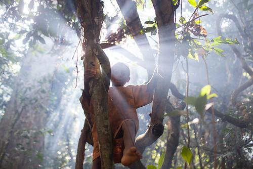 jungle equatorial cameroon baka pygmy pygmies iboga 5862 bwiti