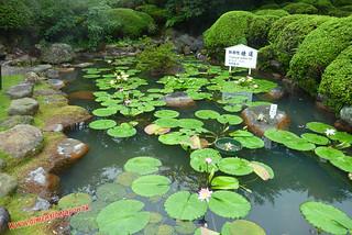 P1060577 Infierno Umi Jigoku (Beppu) 13-07-2010