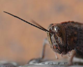A grasshopper in my shoe!