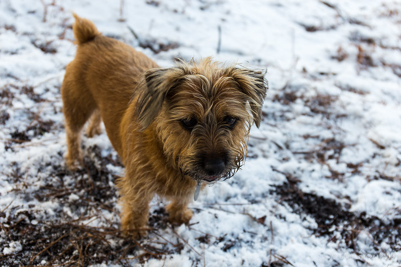 Benji in the snow