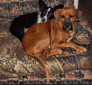 Buster and Teegan Snuggled