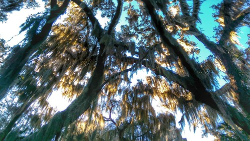 trees forest florida htc