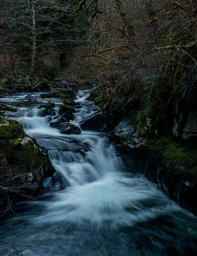 oregon forest waterfall siuslaw