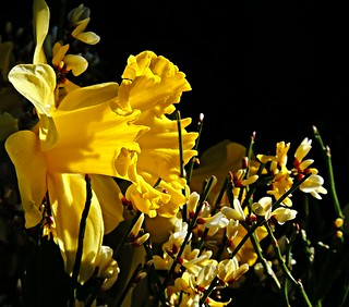 spring regards