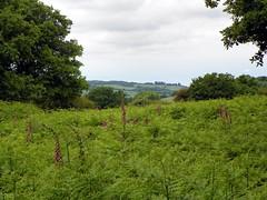 GOC Berkhamsted & Frithsden 009: Ashridge Estate