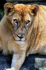 Zoo Johor