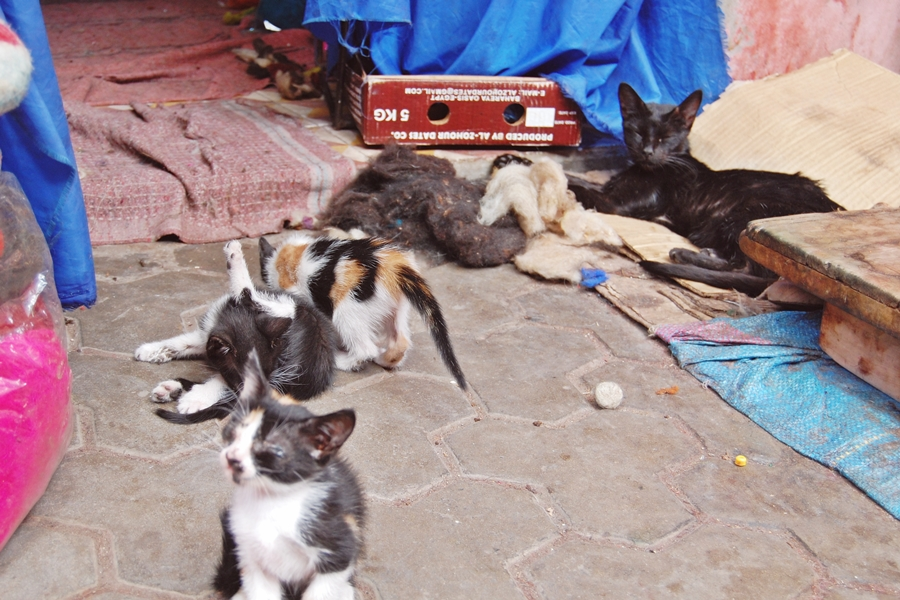 Animaux Marrakech (2)