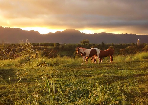 sunset horses hawaii
