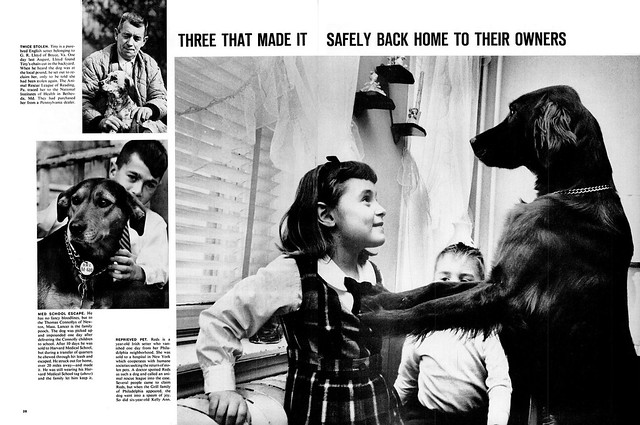 LIFE February 4, 1966 - Concentration Camps for Dogs (4)