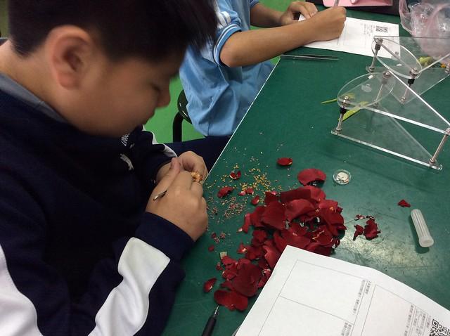 學生用iPad觀察花和果實14