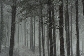 Tormenta di neve in Pratomagno