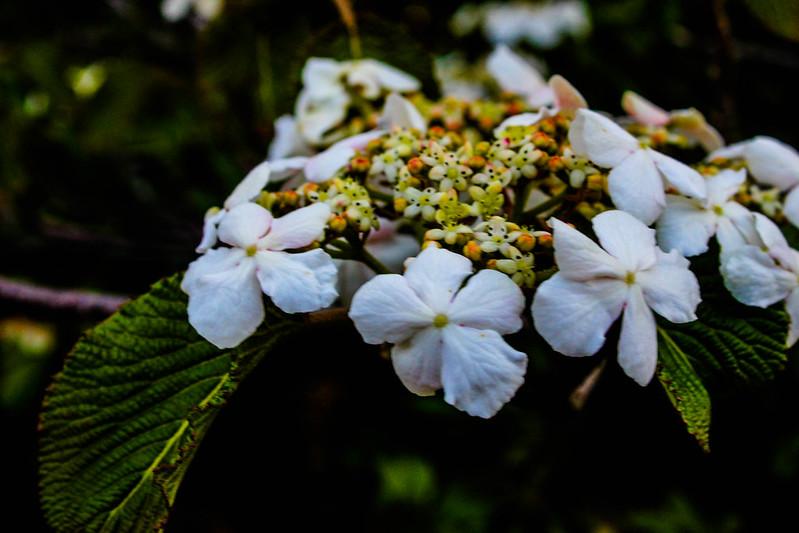 2014-05-04_00322_九州登山旅行.jpg