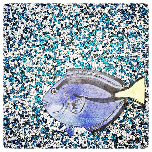 Blue Tang in the Sidewalk. #fish #marine #saltwater #taipeizoo #taipei #zoo #taiwan #台北 #台灣