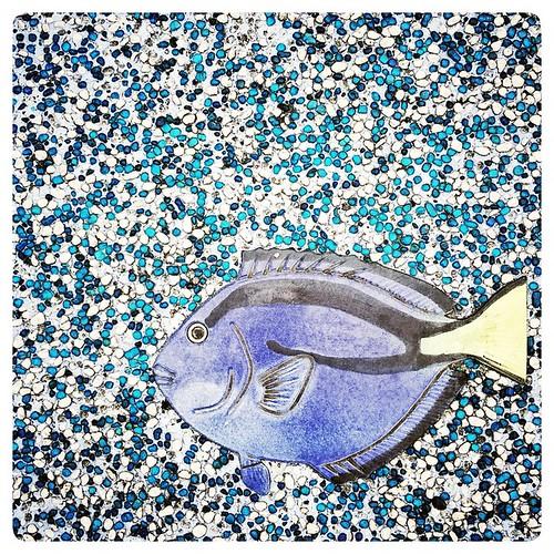 Blue Tang in the Sidewalk. #fish #marine #saltwater #taipeizoo #taipei #zoo #taiwan #台北 #台灣