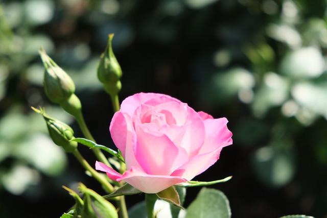 Pink puszta