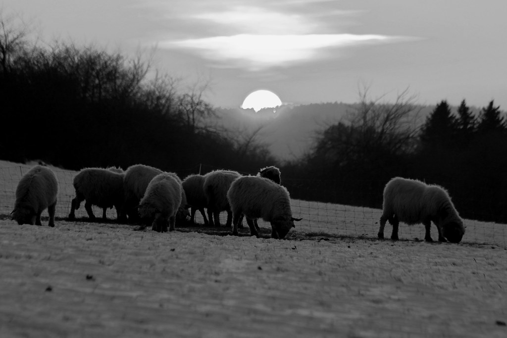 counting sheep by Wackelaugen