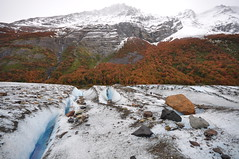 The Perito Moreno Glacier, vegetation and the peaks on the Glaciares National Park