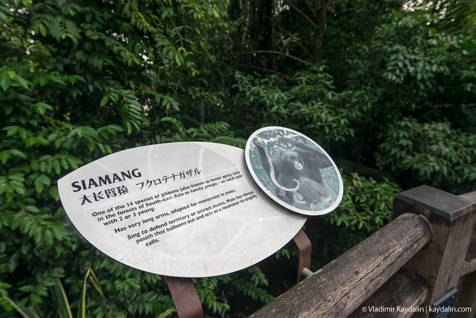 табличка Siamang
