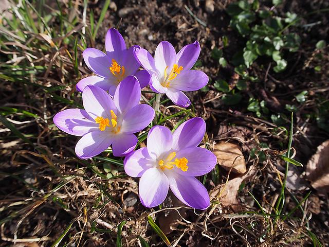 15-03-08_Reichenau_P3080049