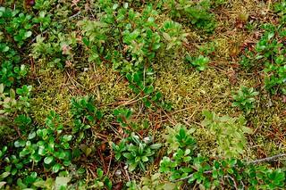 Kennedy Siding - ground vegetation