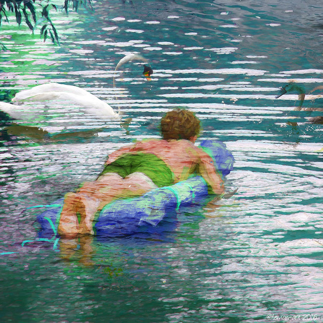 Swimming with swans