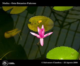 882_FSC4067_bis_Orto_Botanico_Palermo