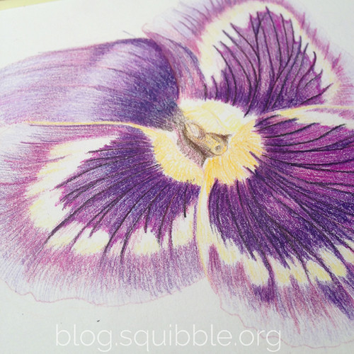 squibble_design_pansy_painting_week3_4