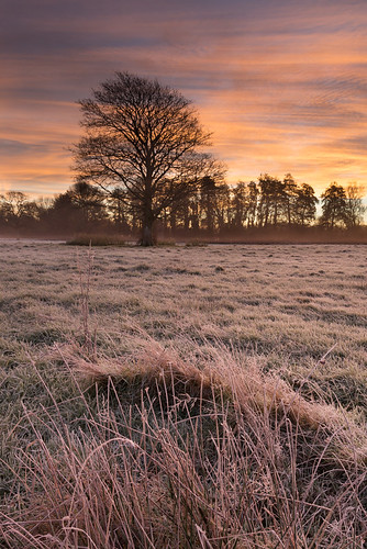 pink autumn light england sky orange colour tree field grass sunrise landscape photography frost jake unitedkingdom warmth dorset pike foreground weststafford