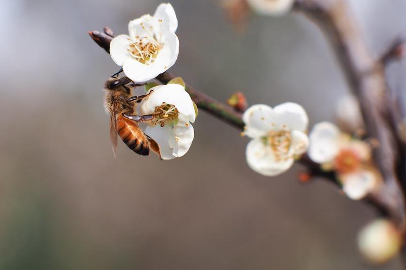 Bee|Chiayi 梅山