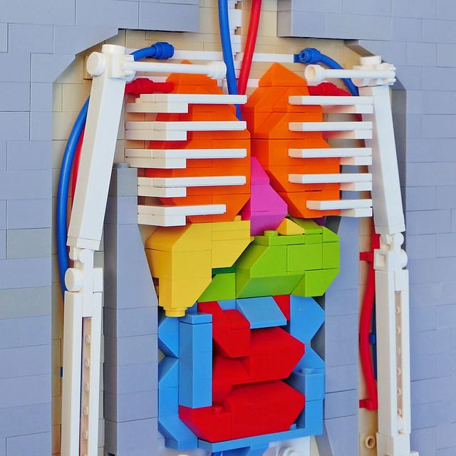 LEGO: Human Body