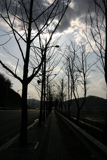 Winter trees and streets