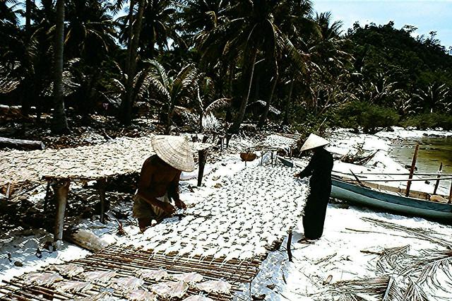 Vietnam 1968 - Villagers Drying Fish