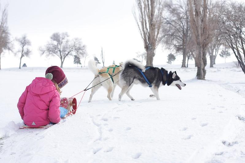 Sled Dog Rescue Ontario