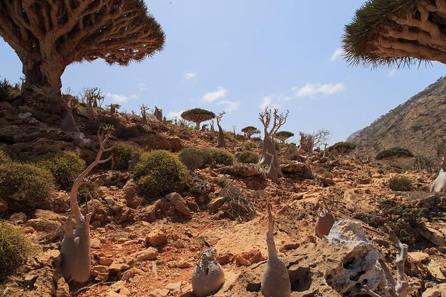 Homhil Plateau