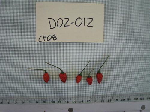 D02-012 CF08 Fr1