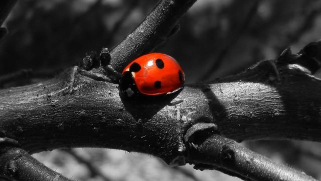 Ladybird Splash