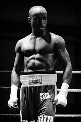 Boxers @ rest