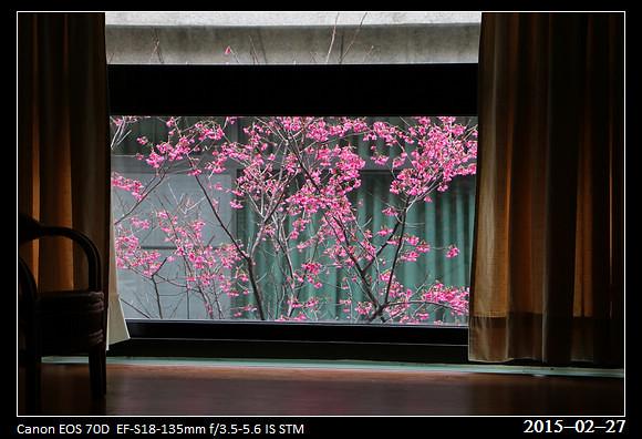 2015_0227Cherry_Blossom1