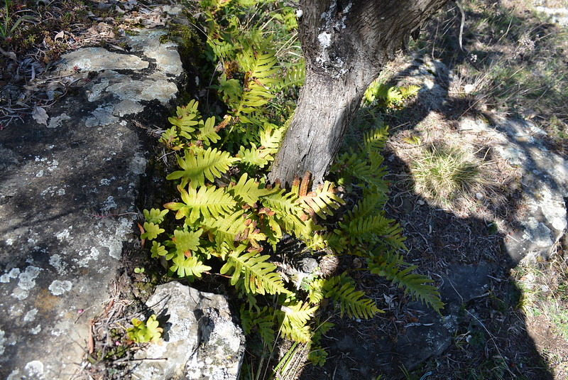 Orchidées 'in situ' 16702586111_5cbf480153_c