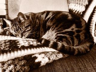 cat|relax