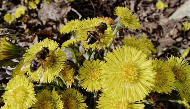First bees - Premières abeilles
