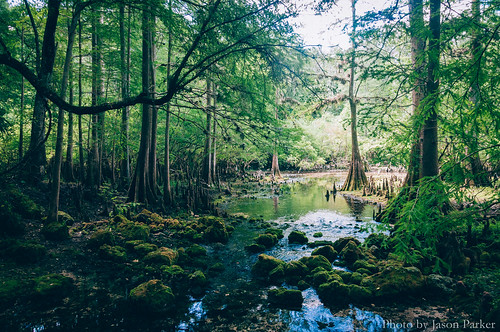 nature water rock creek forest landscape spring woods florida outdoor scenic cypress geology polarizer karst suwannee fanningsprings fanningspringsstatepark springhunters littlefanning
