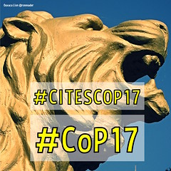 Wondering where the lions are. #CoP17 #CITESCOP17 this week (September 24-October 5) in Johannesburg, South Africa (square)