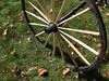 Wagon Wheel in the Grass